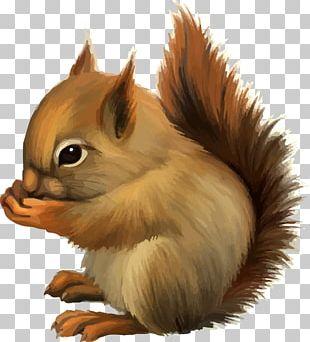 Squirrel Cartoon Cuteness PNG
