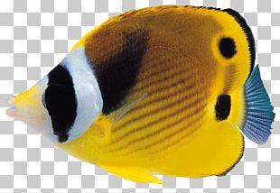 Coral Reef Fish PNG