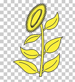 Sunflower M Yellow Sunflower Seed Black PNG