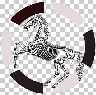Horse Human Skeleton Anatomy Navicular Bone PNG