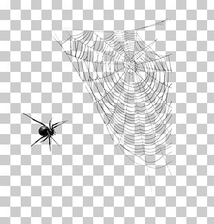 Spider Web Insect Halloween PNG