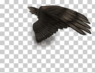 Bird Buffalo Wing Feather Vulture PNG