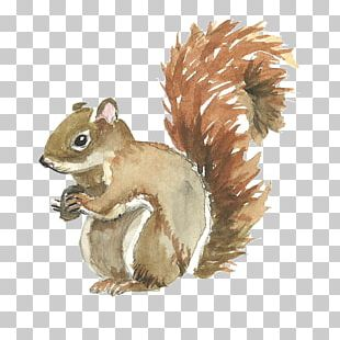 Squirrel Watercolor Painting PNG