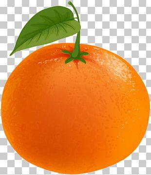 Mandarin Orange Tangerine Tangelo Clementine Grapefruit PNG