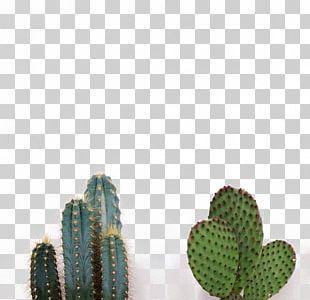 Cactaceae Succulent Plant PNG