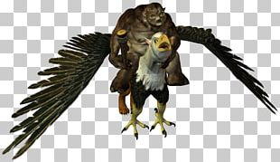 Owl Hawk Fauna Eagle Beak PNG