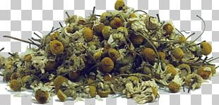 Green Tea Sencha Chamomile Earl Grey Tea PNG