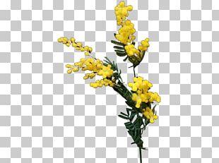 Australia Artificial Flower Cut Flowers Floral Design PNG