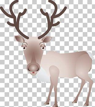 Reindeer Elk Moose Antler PNG
