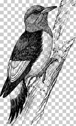 Downy Woodpecker Bird Penguin PNG