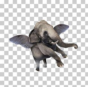 Elephant Tusk Stock Photography Illustration PNG