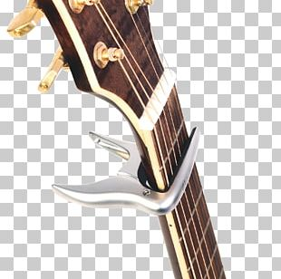 Musical Instruments Electric Guitar String Instruments Acoustic Guitar PNG
