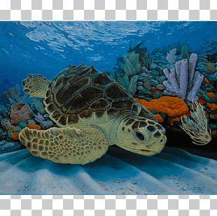 Loggerhead Sea Turtle Pond Turtles Hawksbill Sea Turtle PNG