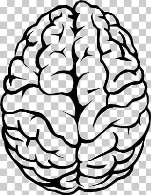 Human Brain Drawing PNG