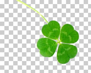 Four-leaf Clover Clover Culture Luck PNG