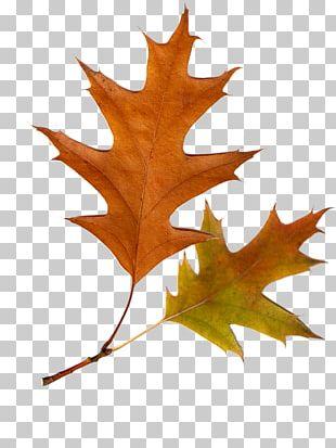 Autumn Leaves Autumn Leaf Color Tree PNG
