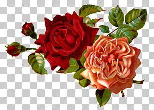 Flower Rose Floral Design PNG