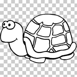 Sea Turtle Drawing Teenage Mutant Ninja Turtles Painting PNG