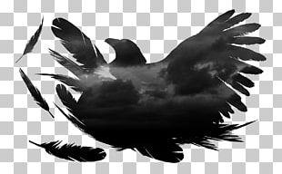 Eagle Water Bird Beak Wing PNG