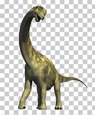 Dinosaur Museum Triceratops Camarasaurus Velociraptor PNG