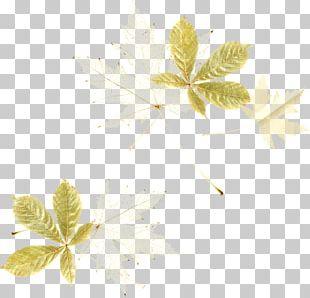 Flower Leaf Petal Plant Stem PNG
