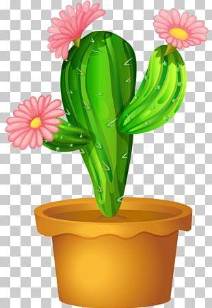 Cactus Flowers Cactaceae Plant PNG