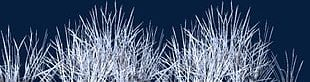 Snow Grass PNG