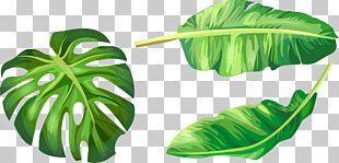 Banana Leaf Euclidean Illustration PNG