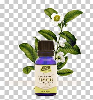 Tea Tree Oil Camellia Sinensis Herbal Tea Essential Oil PNG