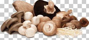 Mushrooms PNG