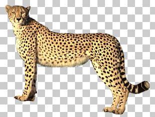 Savannah Cat Cheetah Felidae Lion Jaguar PNG