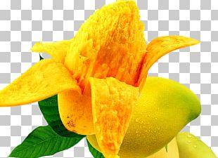 Mango Food Auglis Fruit PNG