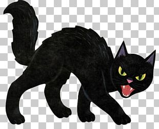 Black Cat Halloween Kitten PNG