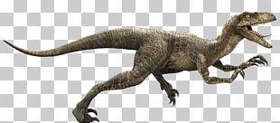 Velociraptor Owen Jurassic Park YouTube Indominus Rex PNG