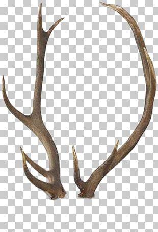 Reindeer Antler Elk White-tailed Deer PNG