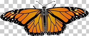 Monarch Butterfly Drawing PNG