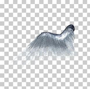 Wing Butterfly PNG