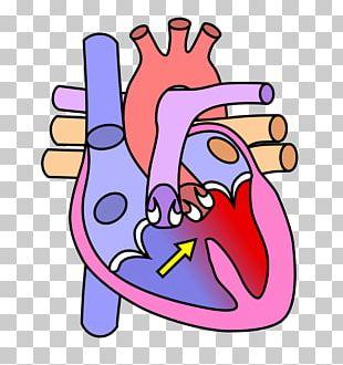 Heart Valve Diagram Human Body Circulatory System PNG