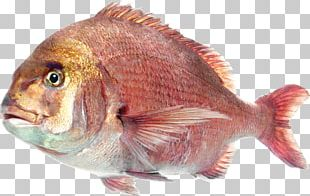 Deep Sea Fish Saltwater Fish PNG