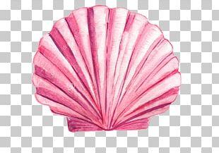 Drawing Seashell Watercolor Painting PNG