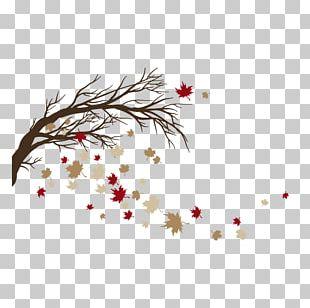 Twig Flora Design Illustration PNG