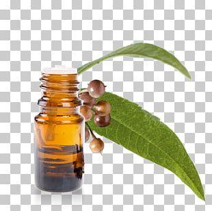 Eucalyptus Oil Eucalyptus Globulus Eucalyptus Radiata Essential Oil PNG