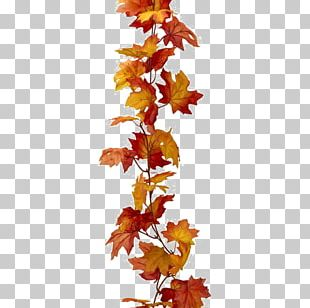 Maple Leaf Autumn Leaf Color PNG
