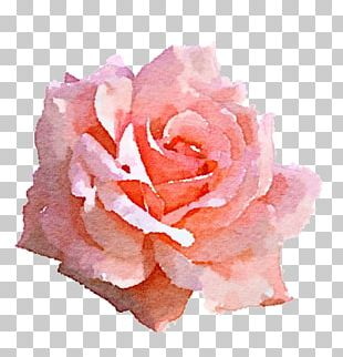Light Rose Pink PNG