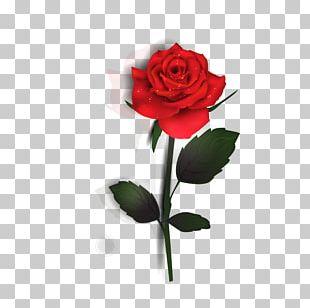 Rose Euclidean PNG