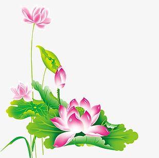 Lotus Lotus PNG