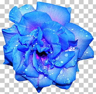 Blue Rose Flower PNG