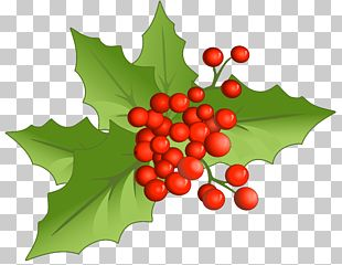 Holly Aquifoliales Natural Foods Fruit Christmas PNG