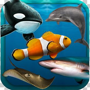 Shark Marine Biology Coral Reef Fish Desktop PNG