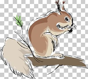 Squirrel Chipmunk Rodent PNG